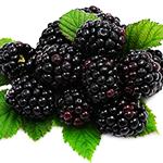 qua_mam_xoi_den_blackberry