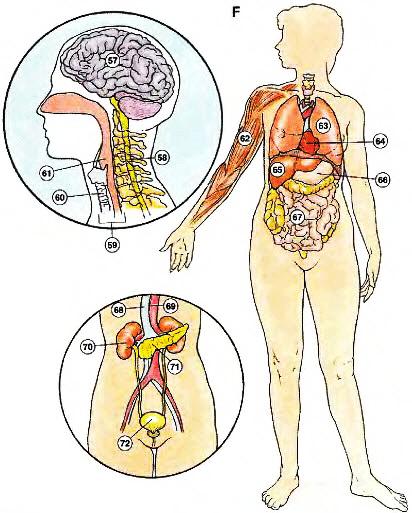 cac-bo-phan-ben-trong-internal-organs