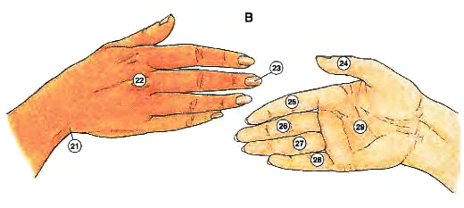 canh-tay-hand