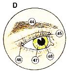 mat-eye