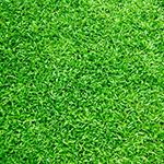 grass-co