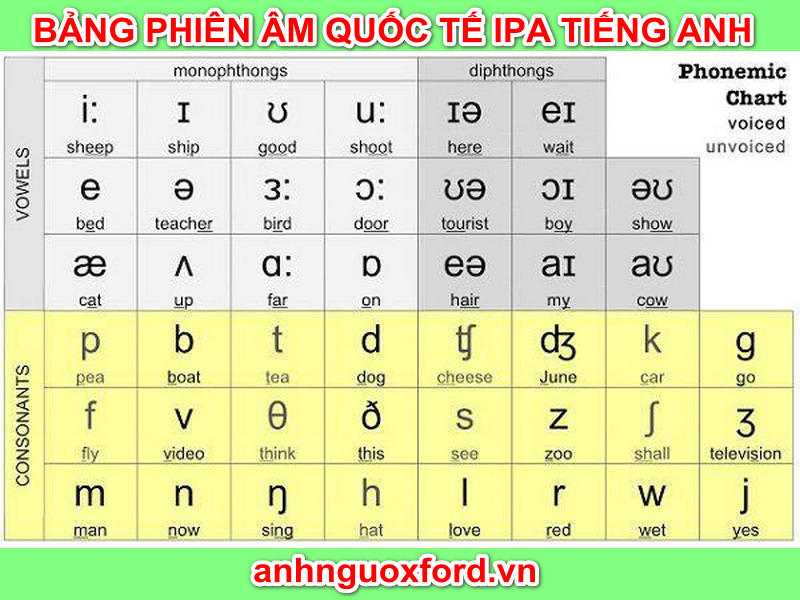 Học phát âm bằng bảng IPA tiếng Anh là bước đầu tiên giúp tự học phát âm